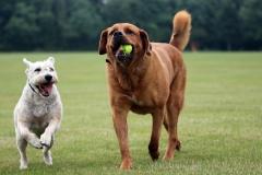 Dazzling Doggies - Part 1 - Bruno & Misha on 02/07/2021 at Shanganagh Park, Shankill. (C) Alwyn Robinson Photography @tourni_heaven