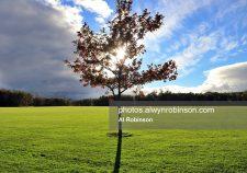 Shanganagh Park